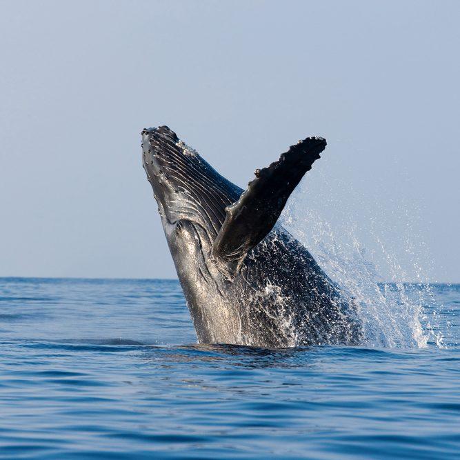 WhaleBanner